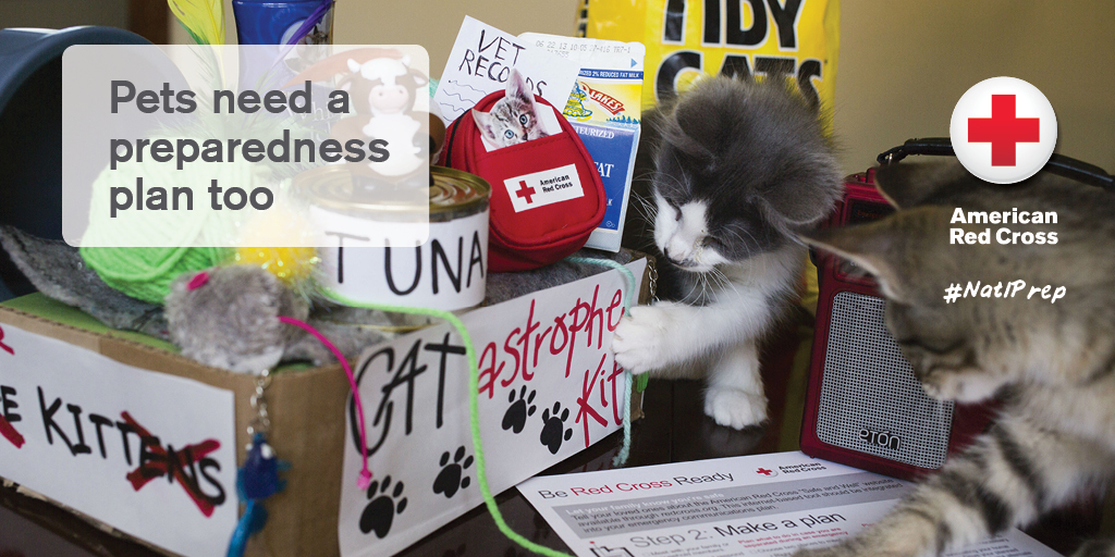 "Cats enjoy their ""Cat-trastrophe"" preparedness kit."